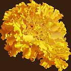 Yellow Marigold  by TinaGraphics