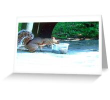 Squirrel having din din Greeting Card