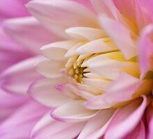 Pink Dahlia by Mirka Rueda Rodriguez