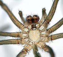 Spider Exoskeleton by Marloag