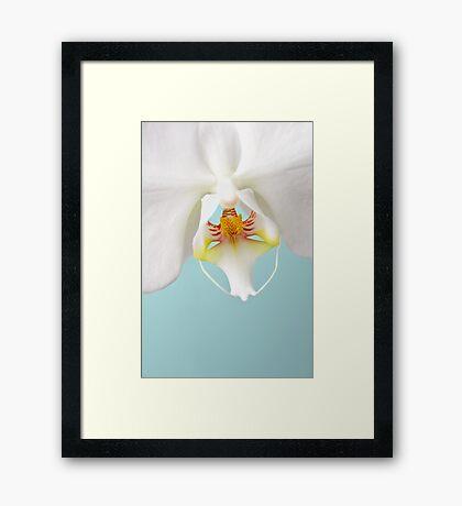 White Phalaenopsis Moth Orchid Framed Print