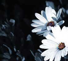 Black and White flowers by Greg Hughes