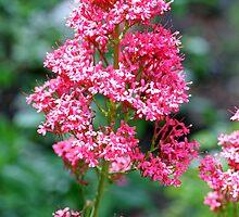 """""""Olympic Peninsula Flowers"""" by Lynn Bawden"""