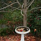 Autumn Fountain by Catherine Tranter