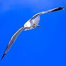 Gliding by BigD