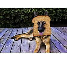 HUMOUR DOG PICTURE>>GERMAN SHEPARD ...INBRED...PICTURE AND OR CARD ECT. Photographic Print
