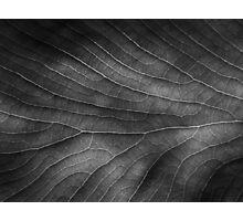 Venation Photographic Print