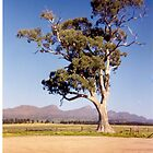 Cazneaux's tree by chris51