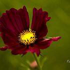 Glowing by caroleann1947