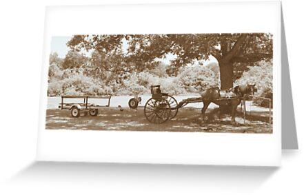 Amish Boat Trailer by Ann Rodriquez