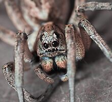 Portrait of a Wolf Spider by AllshotsImaging