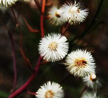 Wild flowers by Antanas