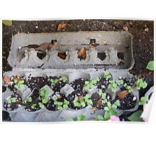 New Beginnings - Egg crates make a great start for new seedlings.  Then plant directly into the ground when ready! Poster