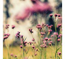 Magic of Pink Photographic Print