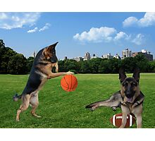 WATCH ME DRIBBLE >>GERMAN SHEPARDS HAVING FUN IN THE PARK Photographic Print