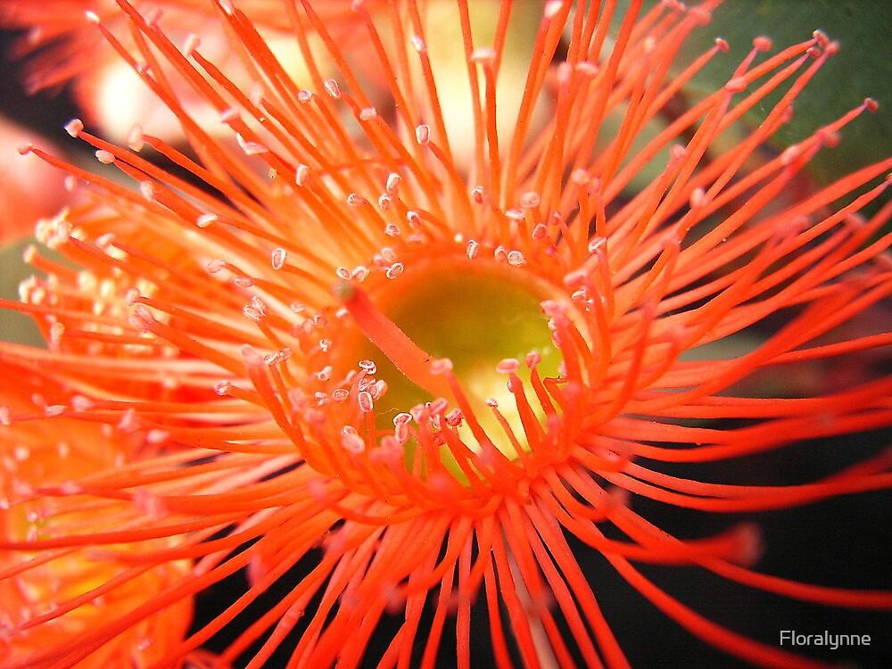 orange eucalypt by Floralynne