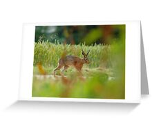 Stretching His Harey Legs Greeting Card