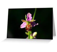 Ophrys Apifera - Macro Greeting Card