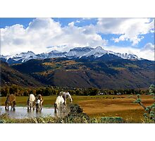 945-High Country Photographic Print