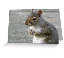 Who Me?  I Didn't Eat The Bird Seed!!! Greeting Card