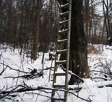 Snowy Ladder by Jennifer Embrey