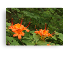 Flame Azalea II Canvas Print