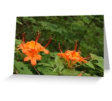 Flame Azalea II Greeting Card