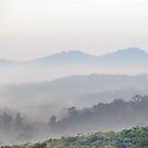 A Misty Morning by Steven  Siow