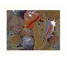 """Pearly Shells"".. Art Print"