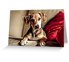 Save that puppy ! Greeting Card