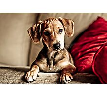 Save that puppy ! Photographic Print