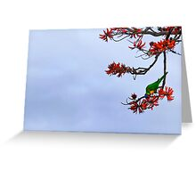Parakeet's Paradise Greeting Card