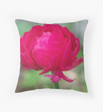 The lovely ranunculus Throw Pillow