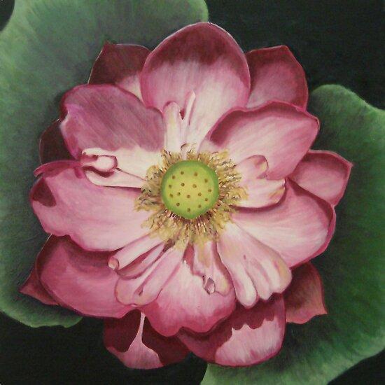 Pink Lotus  by Pam Wilkie