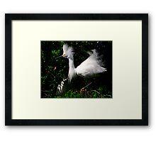 Fluffy Framed Print