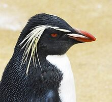 Rockhopper penguin  by ljm000