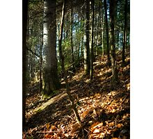 Forest Vision Photographic Print