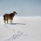 A dog in the snow by Gino Caron