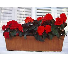 Red Basket Photographic Print