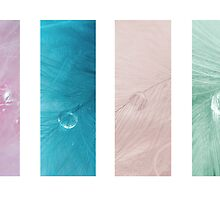 Feather Drop Montage by Stephanie Hillson