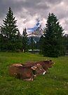 Why do Alpine Cows wear Bells? by Krys Bailey