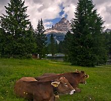 Why do Alpine Cows wear Bells? by Krys Bailey