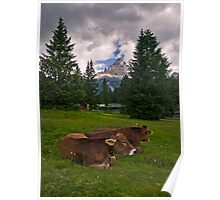 Why do Alpine Cows wear Bells? Poster