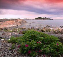 Roses.. by Päivi  Valkonen