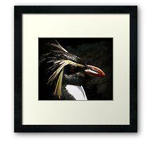 Penguin Portrait Framed Print