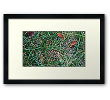 Grassy Earth Framed Print