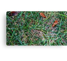 Grassy Earth Canvas Print