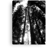 Redwoods in Black and White Canvas Print