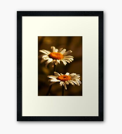 Front Yard Daisies Framed Print