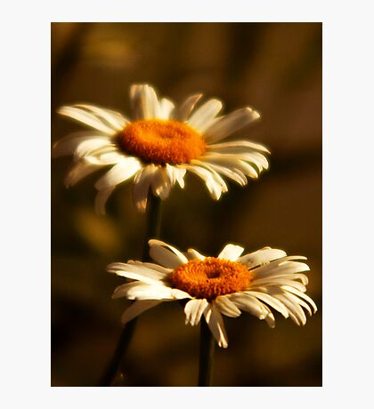 Front Yard Daisies Photographic Print